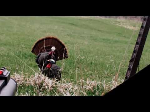 Close Range Turkey Hunt  (NE Kansas)