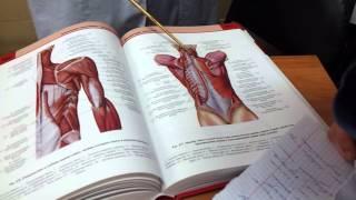 Мышцы спины. Мышцы живота. Мышцы груди. Анатомия. Урок 3(Фонендоскопы, скальпели, аптечки, хиругические наборы для отработки навыков шиться в нашей группе вк https://goo..., 2012-11-27T04:15:57.000Z)
