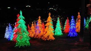 видео Новогодние елки