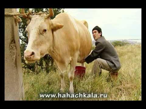 """Реклама от """"Горцев от ума"""" - """"Кизлярская зорька""""."""