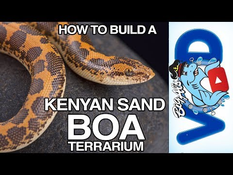 How to Build a Kenyan Sand Boa Enclosure | BigAlsPets.com