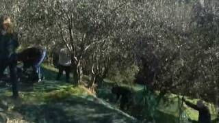 *Ottavio Brajko** Zigo Zago waltz.*Picking Olives 2008