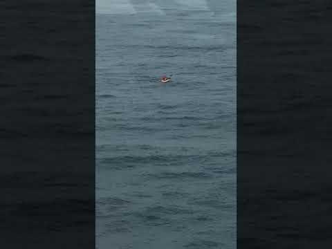 Graban a dos pateras navegando en el Estrecho entre cetáceos