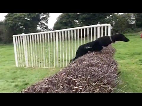 Dog Thinks It Is A Stallion