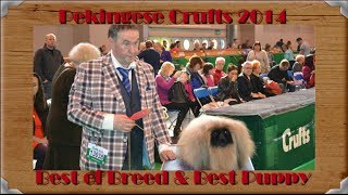 Pekingese Crufts 2014 Best Of Breed And Best Puppy