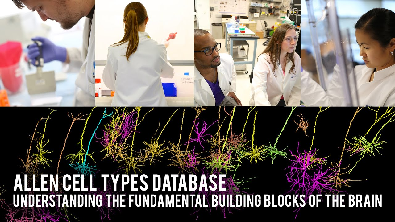 Allen Cell Types Database: Understanding the fundamental building blocks of the brain - YouTube