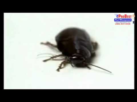 Health Problems Caused by Cockroaches - Pest Control in Gilbert , Arizona