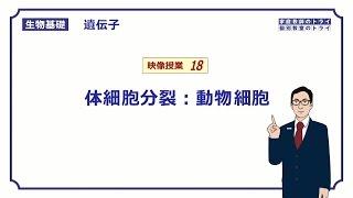 【生物基礎】 遺伝子18 体細胞分裂:動物細胞 (15分)