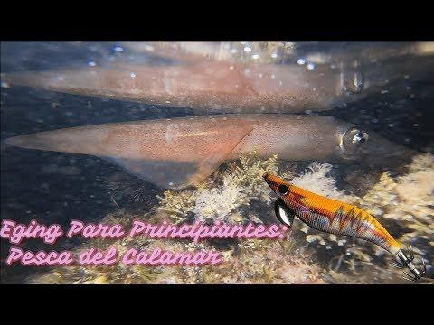 Eging Costa Brava - Pesca Del Calamar Para Principiantes