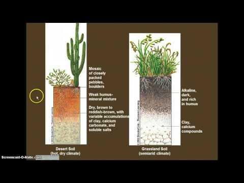 5.1 Soil Systems