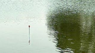 Cận Cảnh Cá Lôi Phao Cực Phê Phần 1 (Fishing) | Câu Cá Vui