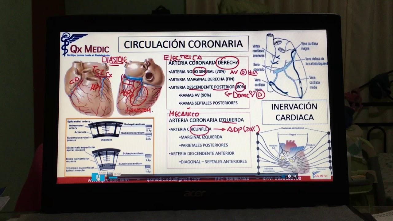 Circulación coronaria - resumen de conceptos básicos - YouTube