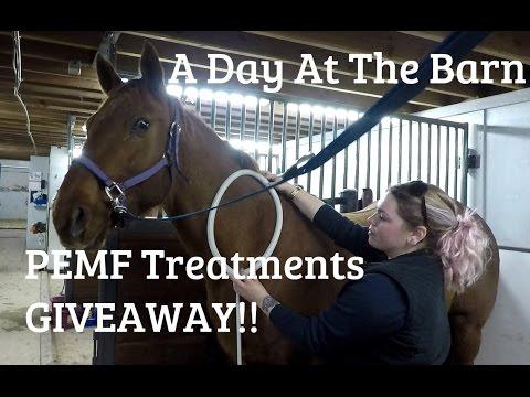 Alberta Eventer Vlog #4 Day At The Barn & PEMF Treatments
