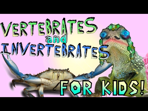 Learning About Vertebrates and Invertebrates