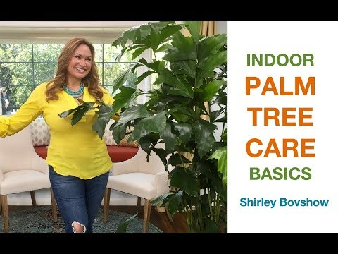 INDOOR PALM TREE CARE, STEP BY STEP