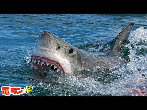 【衝撃】海水浴に行けなくなる・・史上最悪のサメ襲撃事件6選