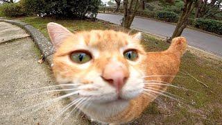公園の茶トラ猫が甘えてきてカワイイ