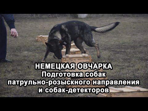 НЕМЕЦКАЯ ОВЧАРКА. Подготовка собак патрульно-розыскного направления и собак-детекторов