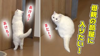 My cat want to enter my mother's room.