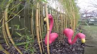 The Original Pink Flamingos By Cado Lawn Art