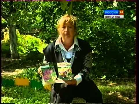 видео: Цветочные растения. Эремурус.