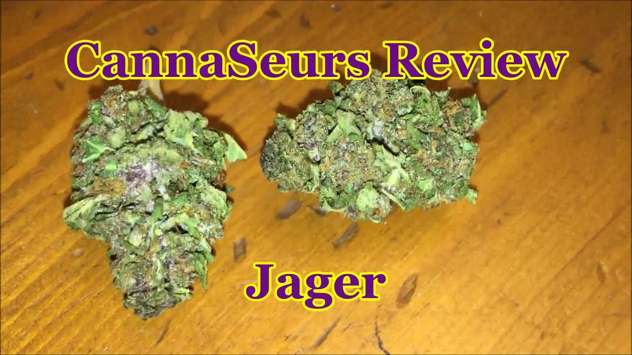 Jager Strain - Everything you need to know & more! – Weed Republic