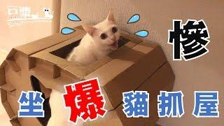 【豆漿 - SoybeanMilk】豆漿的體重..... 連貓抓屋都撐不住了