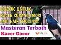 Dengan Suara Kacer Gacor Ini Pasti Kacer Anda Ikut Ngobra Ngamuk  Mp3 - Mp4 Download