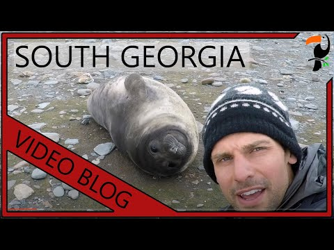 Video Blog - South Georgia and the Falkland Islands