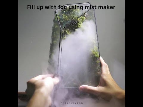 Behind the scenes of making a living moss wall terrarium with fog.