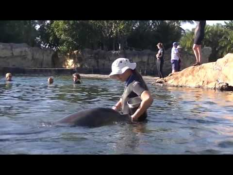 Our Dolphin Adventure at Discovery Cove. 12-27-2016