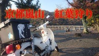 【車載】京都嵐山 カブで紅葉狩り(竹林の道)