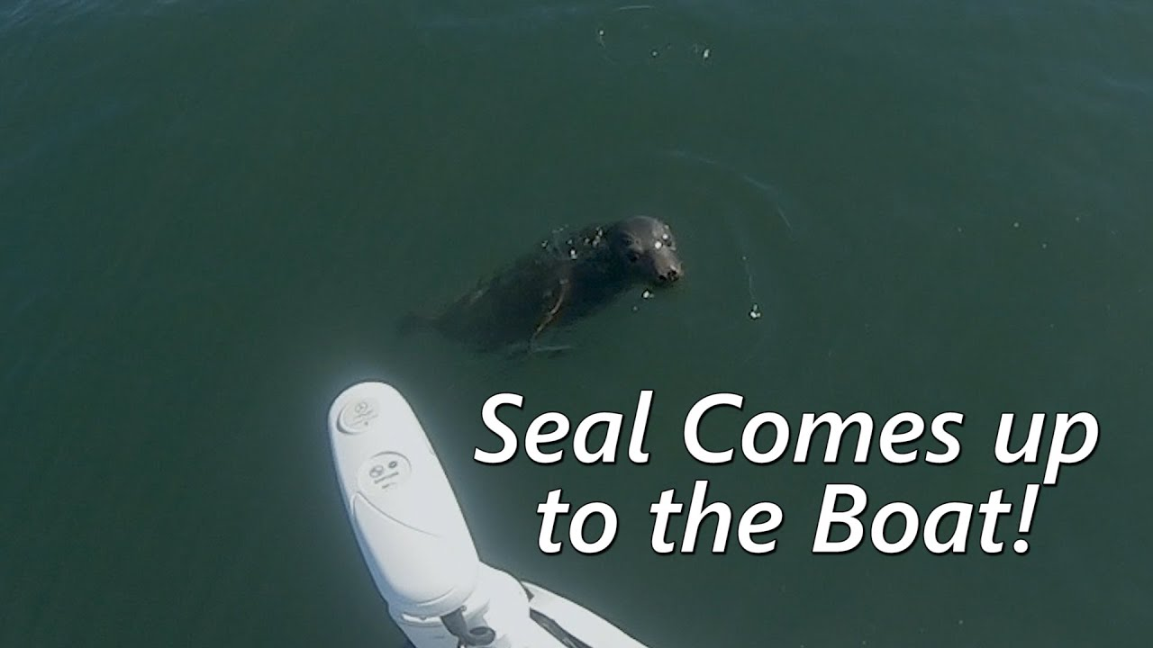 A Seal came right up to the boat! - Striper and Bottom Fishing