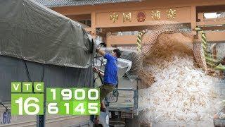 Xuất khẩu gạo sang Trung Quốc, Việt Nam có thiếu gạo? | VTC16
