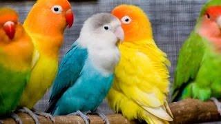 Красивые картинки попугаев.