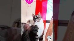 Aina kun tulee rakasta Uolevi kissaani ikävä