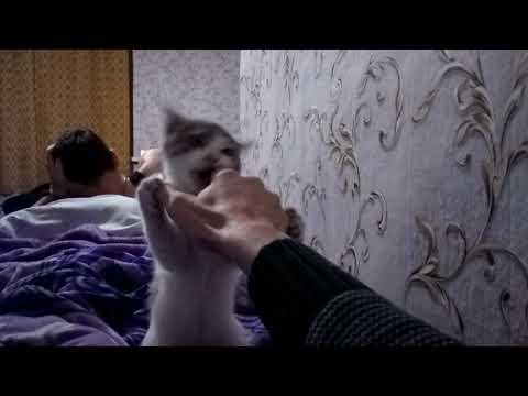 Злобный котик!