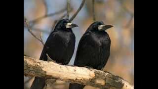 Птицы средней полосы.-Катя и Феодора-5 кл.wmv