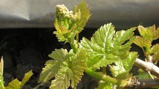 видео Весенние лечебные растения