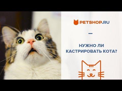 Кастрация кота: 10 наиболее распространенных мифов и фактов