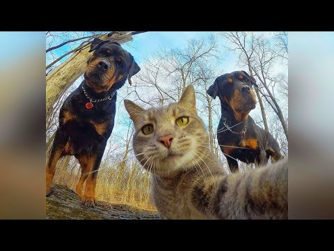 Смешные кошки и собаки 2019 Новые приколы с котами, смешные коты приколы 2019 funny cats animals #85