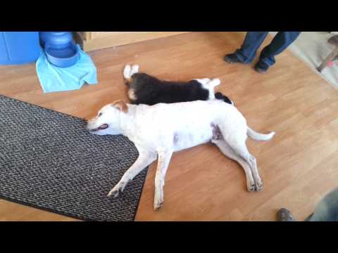 Steve & Finnegan - Rest together after along day