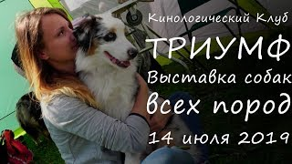 Смотреть видео 14 июля 2019  Выставка собак всех пород  Санкт Петербург онлайн