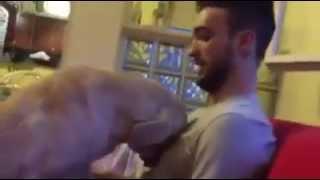 Psie przeprosiny