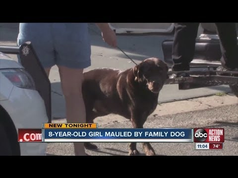 Girl attacked by family's Labrador