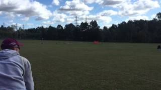 Beagle Club Of Qld - Lure Coursing Pack Run. Group 1