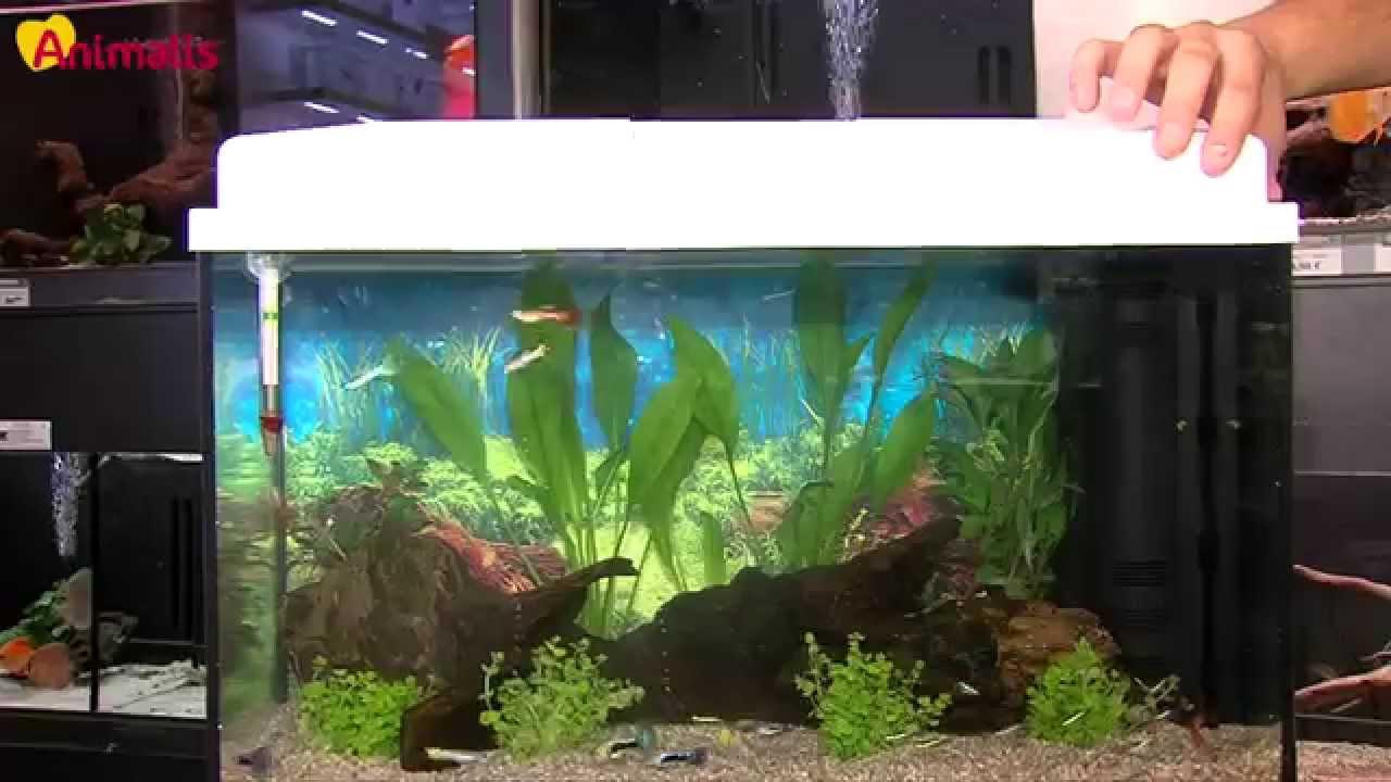 l 39 aquariophilie pour les d butants youtube. Black Bedroom Furniture Sets. Home Design Ideas