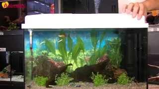 L'aquariophilie pour les débutants