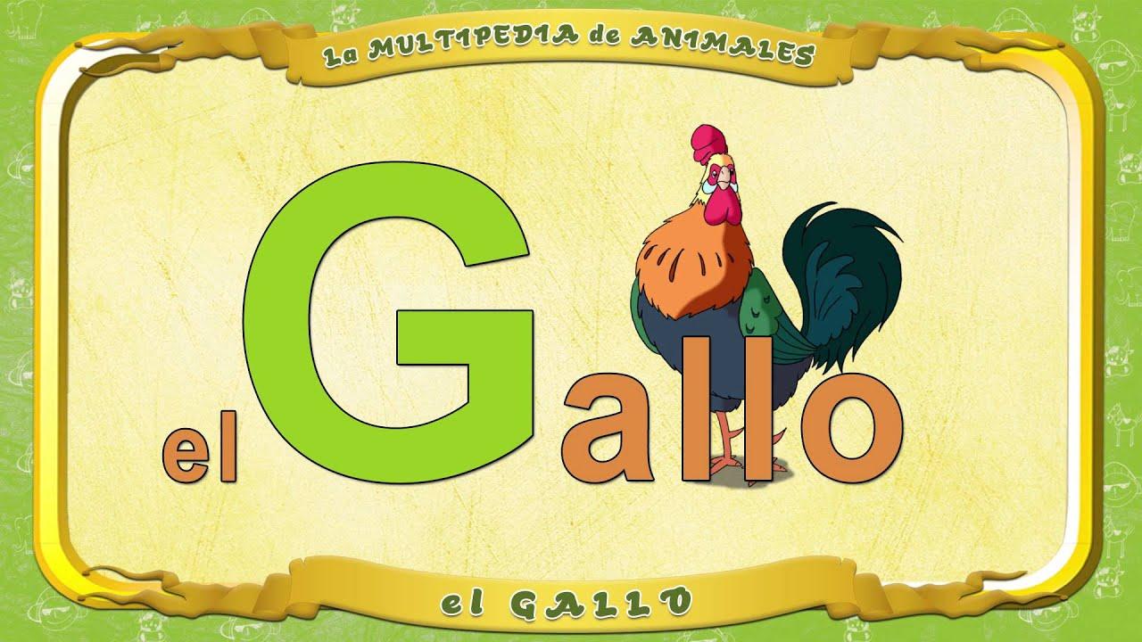 La multipedia de animales letra g el gallo youtube for Cose con la g