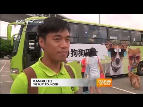 Pet bus allows Hong Kong's pooches to travel easily